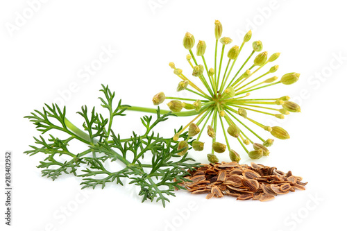 Slika na platnu Fresh fennel and dill with seeds.