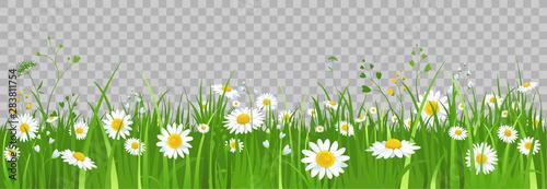 Billede på lærred Flowers and green grass.