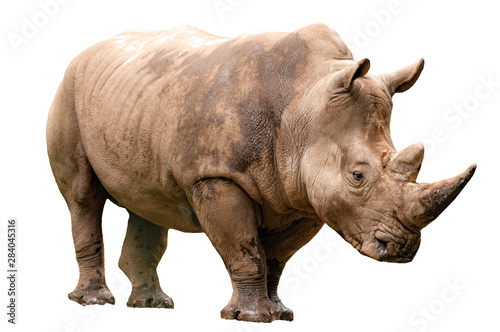 Photo Fauna of the African savanna, endangered species and large mammals  concept them