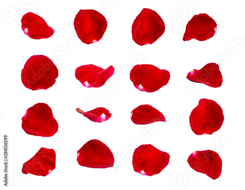 Wallpaper Mural red rose petals isolated