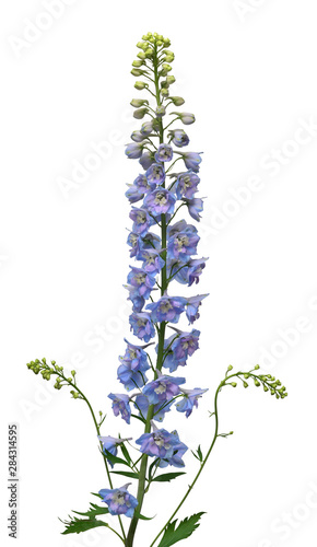 Canvas Print Beautiful bouquet blue delphinium flower isolated on white background