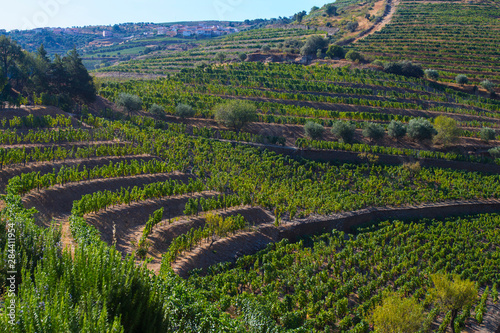 Wallpaper Mural Terraced hillside vineyards in the Douro Valley of Portugal.