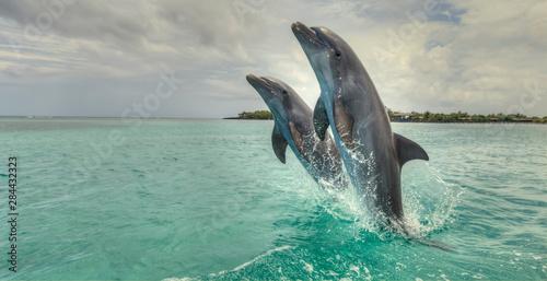 Bottlenose Dolphins (Tursiops Truncatus), Caribbean Sea, Roatan, Bay Islands, Ho Fotobehang