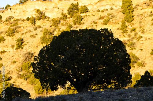 Fotografia, Obraz USA, Utah, Henrieville. Grosvenor Arch Trail Campsite,