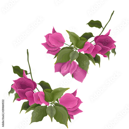 Cuadros en Lienzo pink rose isolated on white background