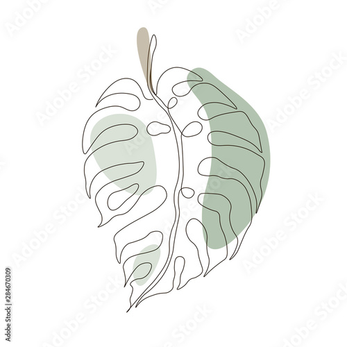 Fotografia Exotic monstera continuous one line drawing summer tropical leaf hand drawn on w