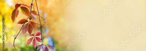 Fotografia Autumn time colorful scene