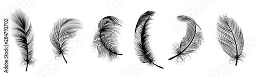Fotografiet Black fluffy feather