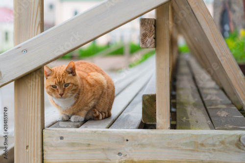 Photo Adorable Orange tabby cat starring people on the bench