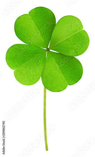 Fotografía clover isolated on white background, clipping path, full depth of field
