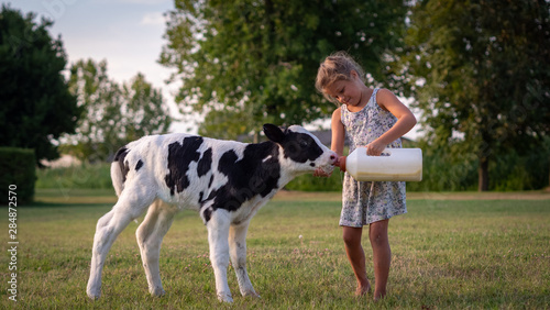 Fotografia Authentic shot of little girl is feeding from the bottle with dummy an ecologically grown newborn calf used for biological milk products industry on a green lawn of a countryside farm with a sunshine
