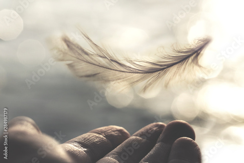 Canvastavla meeting between a delicate feather of a woman's hand