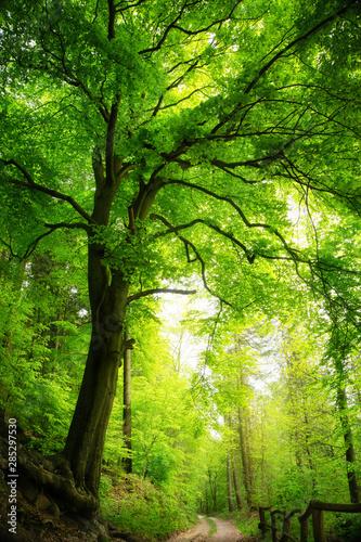 Naklejka na okno łazienkowe Majestatyczny drzewo w zielonym lesie