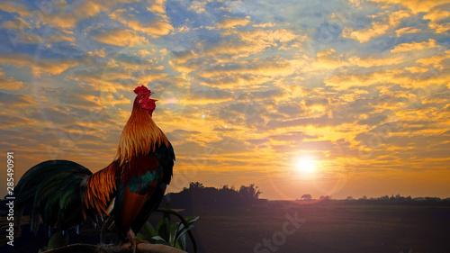 Fotografiet Beautiful cock crowing.
