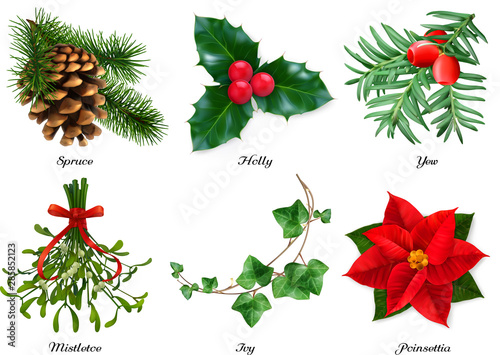 Stampa su Tela Plants, Christmas decorations