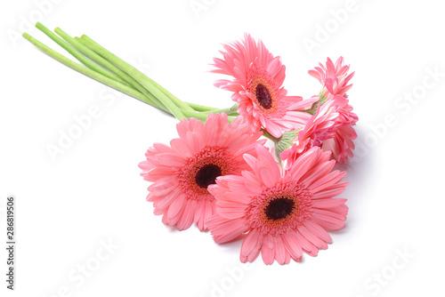 Obraz na plátně Beautiful gerbera flowers on white background