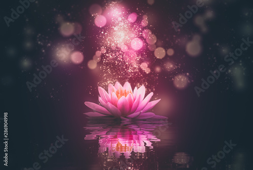 Fotografia lotus reflection pink lighting purple background