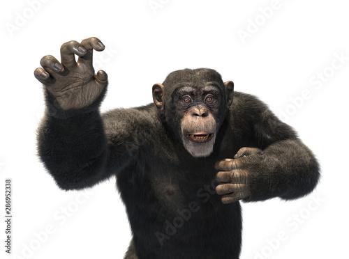 Obraz na plátne Chimp Reaching for Help
