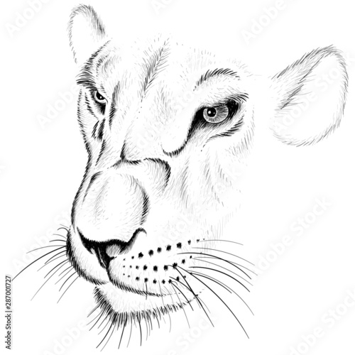 Fotografia The Vector logo young lioness for tattoo or T-shirt  print design or outwear