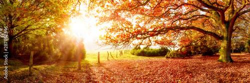 Jesień krajobraz z lasem i łąką w jaskrawym świetle słonecznym