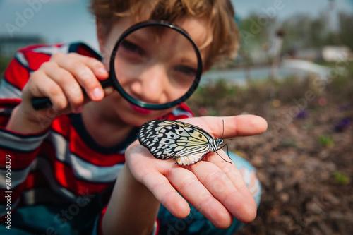Obraz na plátně boy looking at butterfy, kids learning nature