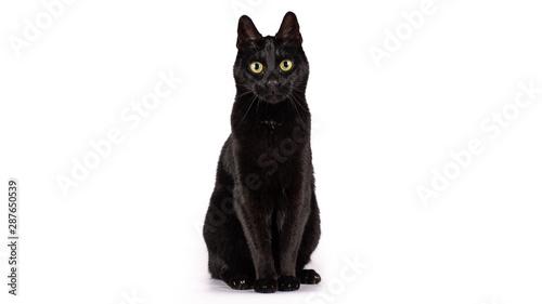 Valokuva Black cat on a white background