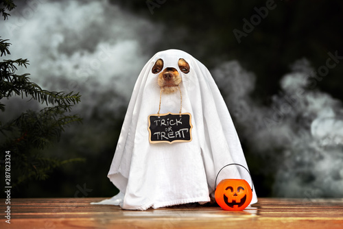Vászonkép funny dog in ghost costume posing for Halloween