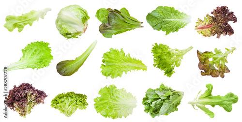 Wallpaper Mural various leaves of lettuce vegetables isolated