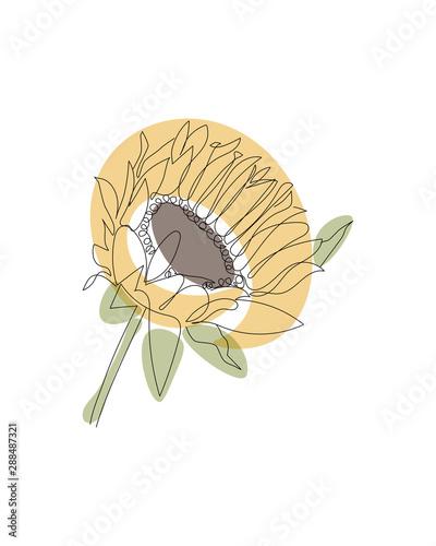 Carta da parati Sunflower linear icon