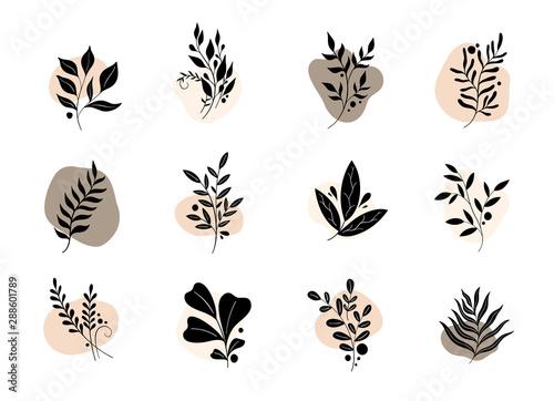 Fotomural Nature set branch leaves logo