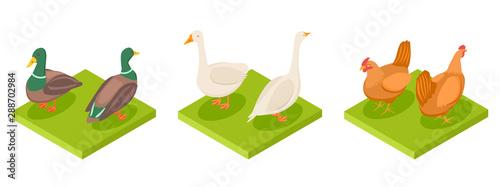 Fotografia Isometric poultry vector
