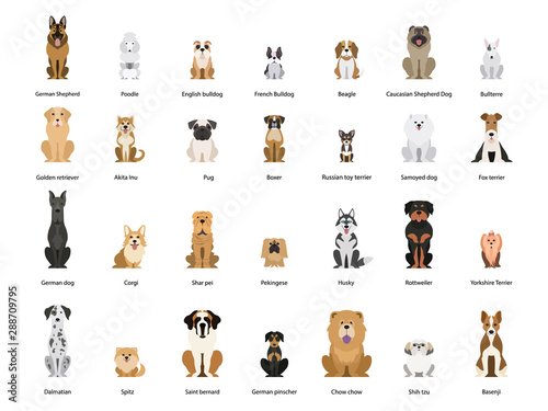 Vászonkép Dog set. Collection of dogs of various breed