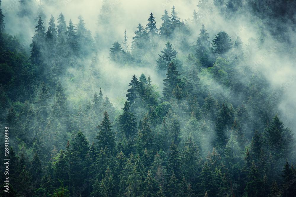 Fototapeta niebieskozielony las we mgle