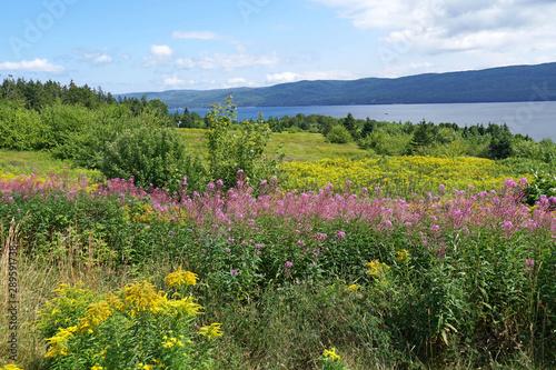 Fotografía Wild flowers on the Cabot Trail, Nova Scotia, beside Bras d'Or Lake