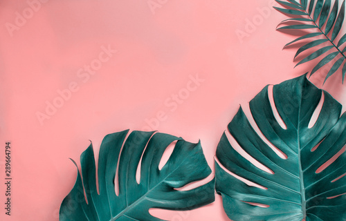 Tropical monstera leaves on a  pink background Fototapet