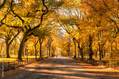 Colorful Central Park in New York City during autumn season Fototapete