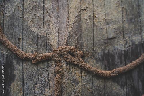 Obraz na płótnie Termite Infested. Close up on termite infested wood