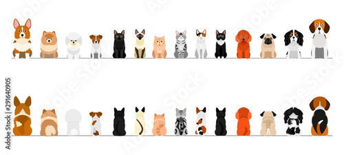 Obraz na płótnie small dogs and cats border border set, full length, front and back