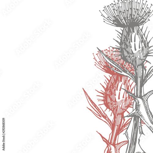 Obraz na plátně Thistle or daisy flower