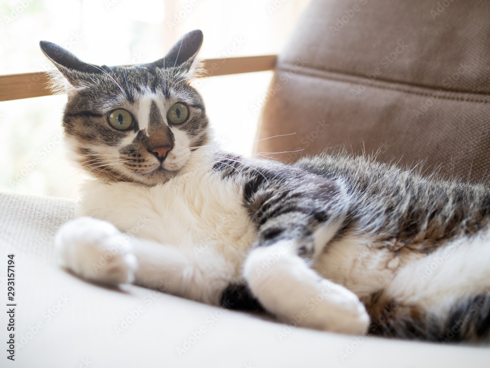 驚いた顔の猫 <span>plik: #293157194 | autor: karinrin</span>