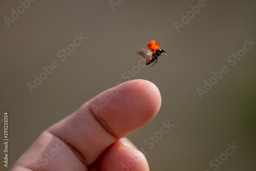 Red lady bug background. Insect flying from finger