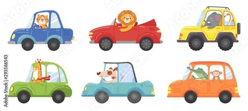 Fotografija Cute animals in funny cars