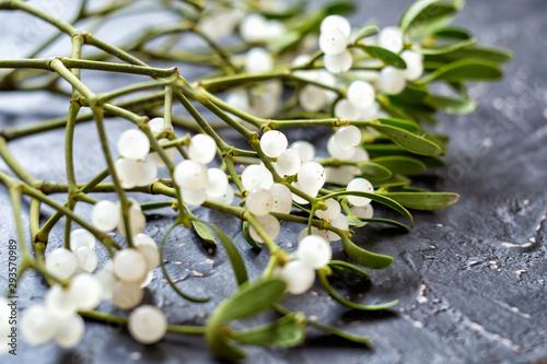 Fotografia Mistletoe branch on a gray textured background