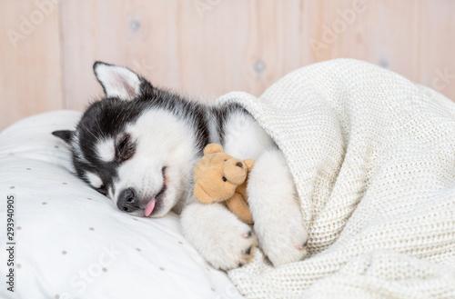 Canvas Print Sleeping Siberian Husky puppy hugging toy bear on pillow under blanket