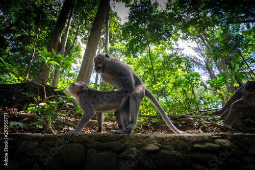 Wallpaper Mural Monkey in forest
