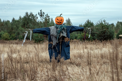Carta da parati A scary scarecrow with a halloween pumpkin head in a field in cloudy weather