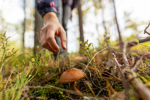 Fotografia Woman picking mushroom in the forest