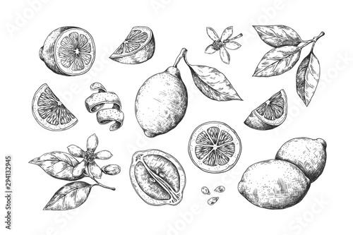 Fototapeta Hand drawn lemon