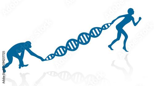 Fotografía Evolution vector illustration