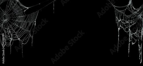 Obraz na płótnie Real creepy spider webs on black banner